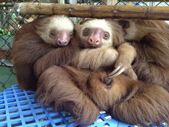 """""""We don't have much but we have each other!""""   The 27 Happiest Sloths In The World"""