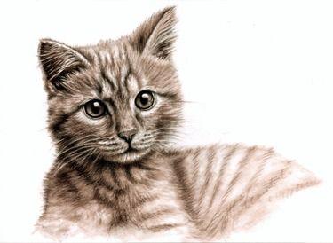 Little Kitten - what's up?