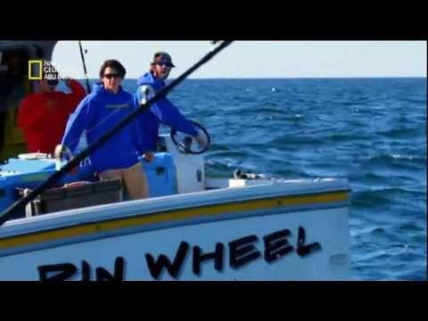 ناشونال جيوغرافيك ابو ظبي Hd سمكة التونه العنيدة موسم جديد العرض الخامس Youtube Abu Dhabi Boat Abu
