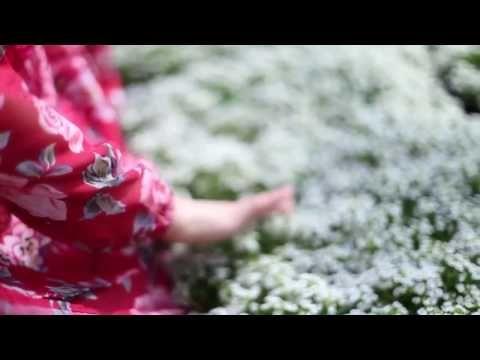 مشاهد للمونتاج أزهار ورد فراشة طبيعة Hd Youtube