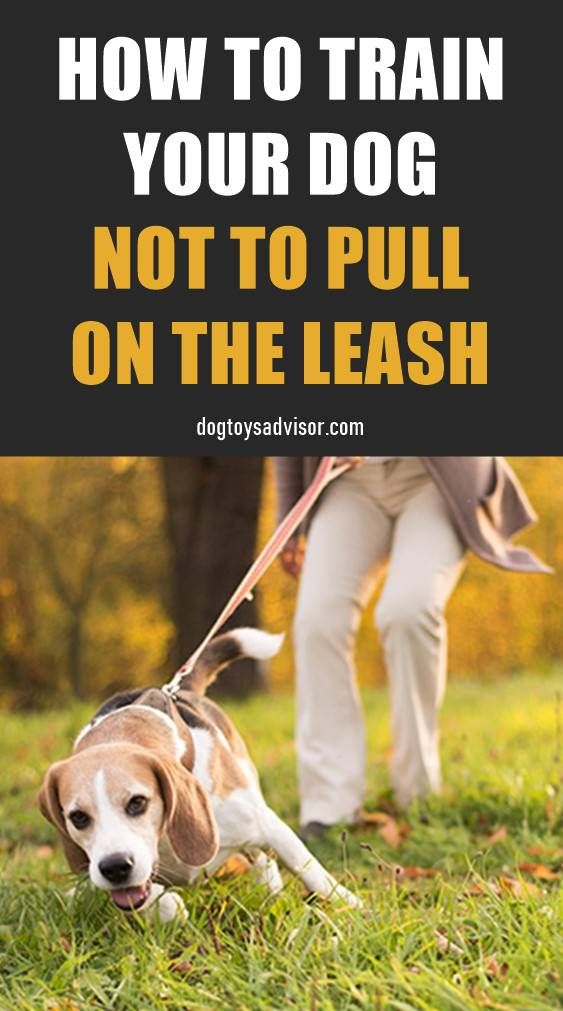 Wondering How To Get A Stubborn Dog To Walk On A Loose Leash