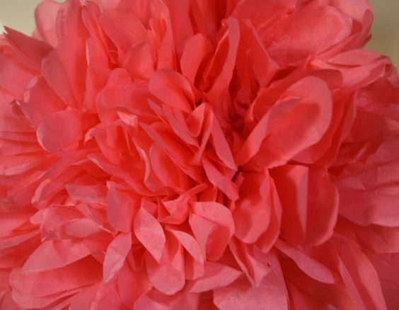 coral pom
