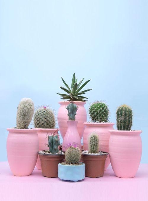 Pink Cactus And Plants Image Imagenes De Plantas Decoracion