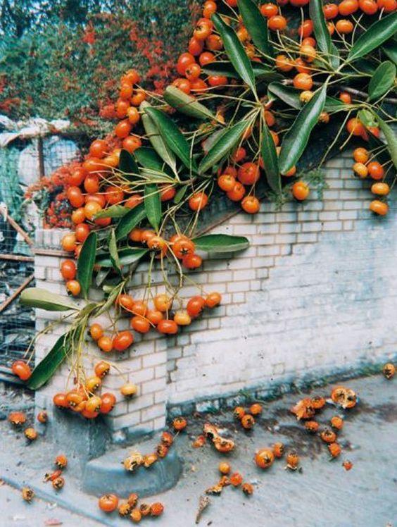 Stephen Gill – Hackney Flowers:
