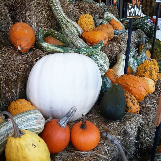#Pumpkinpatch fun! #PumkinSpicedLatte #fallcolors it all adds up to great family time!