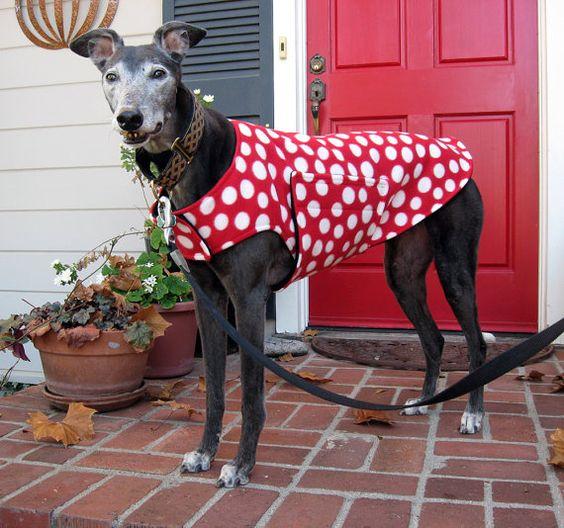 Greyhound Dog Coat & Jacket or Extra Small от TheThimbleAndHound