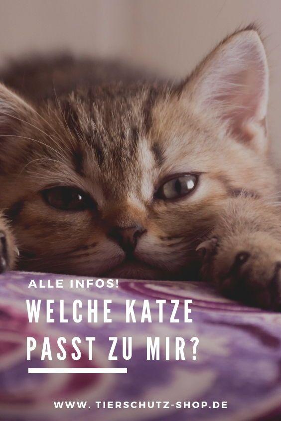 Welche Katze Passt Zu Dir Finde Es Jetzt Heraus Katzen Tierschutz Hunde Tierschutz
