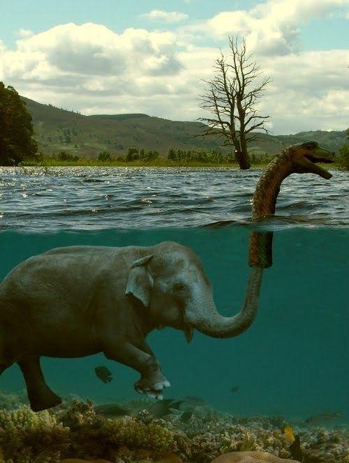 little prankster elephant: Loch Ness Monster, Silly Elephant, Truth, So Funny, Sneaky Elephant, The Secret, Lochness Monster