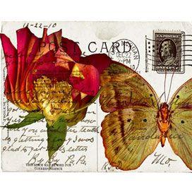 Garden Postcard III Canvas