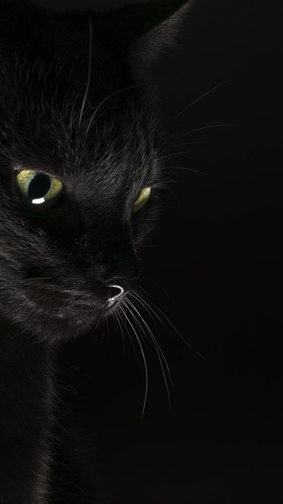 Cat Love Ombiaiinterijeri In 2021 Black Cat Aesthetic Cat Background Cat Aesthetic Black and white wallpaper cat
