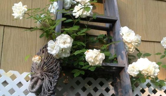 Garden ladder projects you can do!