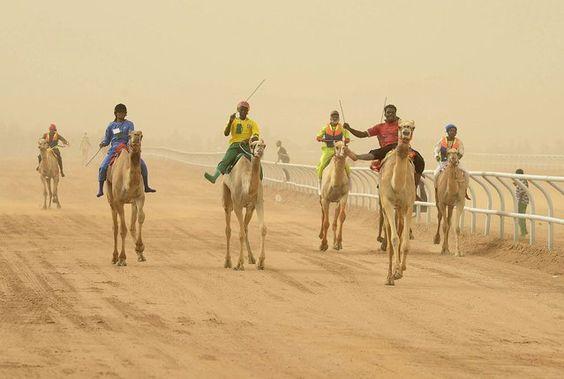 Jockeys race to the finish line during the 20km camel race at the opening of the Janadriya festival near Riyadh, Saudi Arabia, on April 3, 2013. (Photo by Faisal Al Nasser/Reuters)