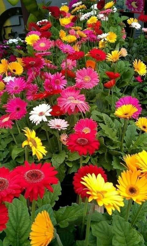 Pin De Maria Tsoynh Em Omorfa Loyloydia Papel De Parede Para Telefone Jardinagem Flores