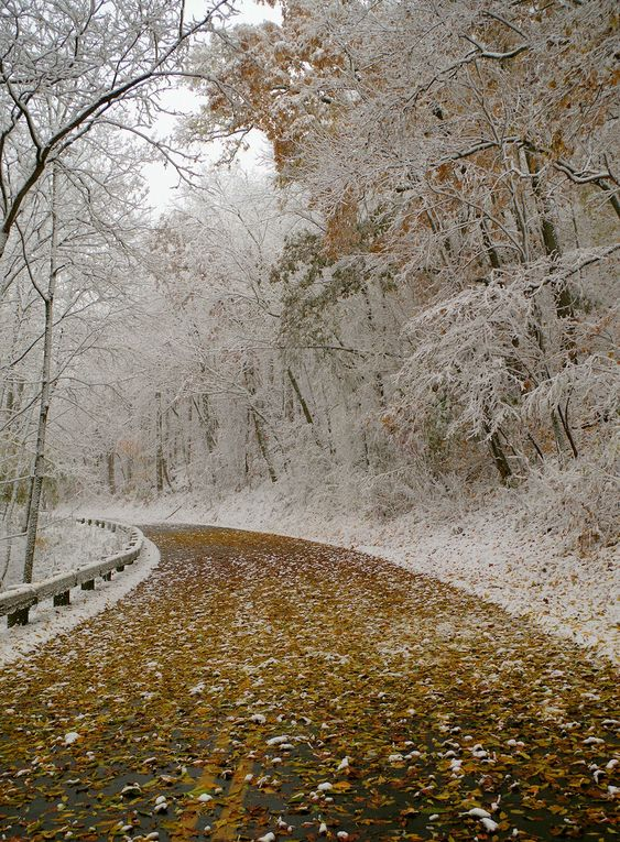 The Blue Ridge Parkway during a fall snow - near Asheville NC