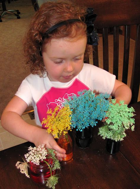 Queen Anne's Lace Garden with food dye