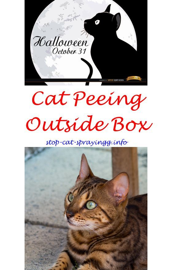 From Nail Biting To That Crazy Chatter We Re Pulling Back The Curtain On Strange Things Cats Do Cat Spray Cat Peeing In House Cats
