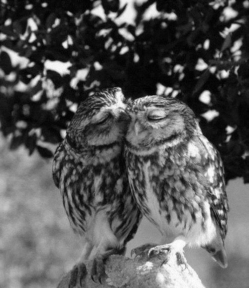 Aves peculiares, mas perfeitas e fofas ao mesmo tempo! *-*