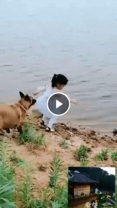 Esse cachorro protegeu a sua dona, pra não entra na água