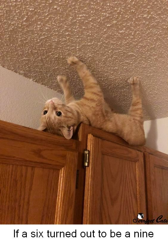 All cats like to play. Are you doing it right? Click to learn how to improve your technique. Pinterest users get discount code. #cats #funny