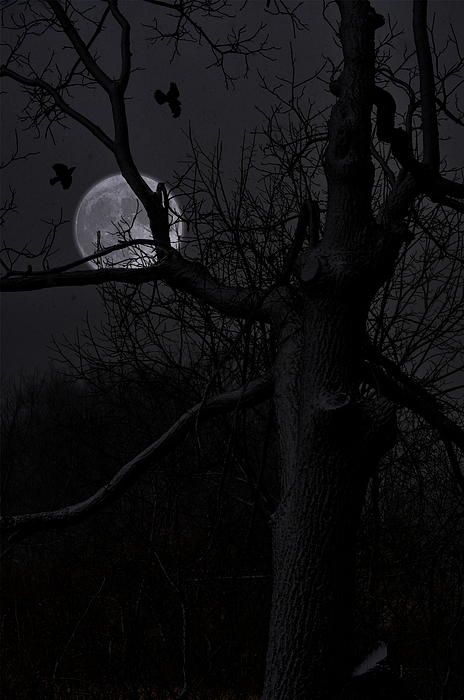 Twisted Moon | Photo By Emily Stauring