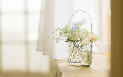 رقيقة للتصميم والفوتوشوب خلفيات كيوت هادية 20130122114966246624 Online Flower Shop Flower Vases Most Beautiful Flowers