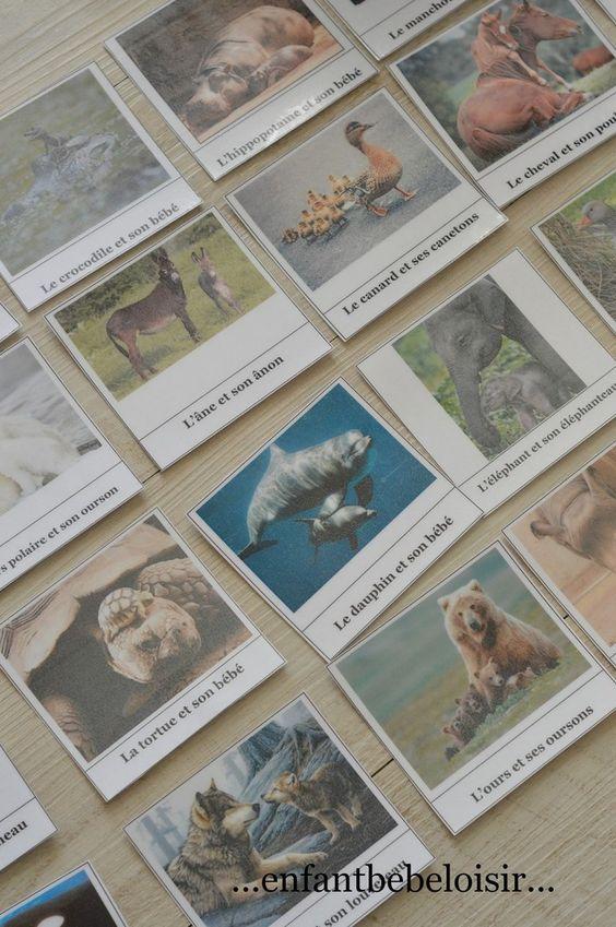 cartes de nomenclature gratuites a imprimer - les animaux et leurs bébés