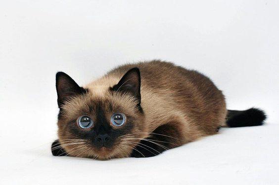 Qué ojos tiene este gato