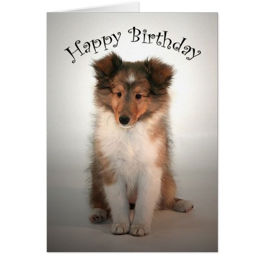 Sheltie Puppy Birthday Card Zazzle Co Uk Happy Dogs Sheltie