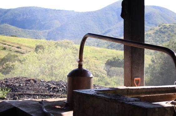 Destilando el Mezcal Convite en alambiques de cobre.