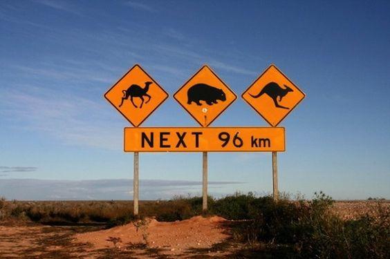 #austrália #viagem #roadtrip #trabalho
