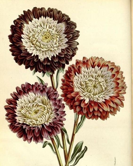 #antiquebotanicals