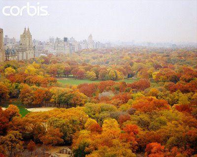 fall fall fall!