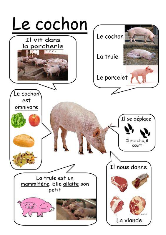 Cochon - Animaux de la ferme: