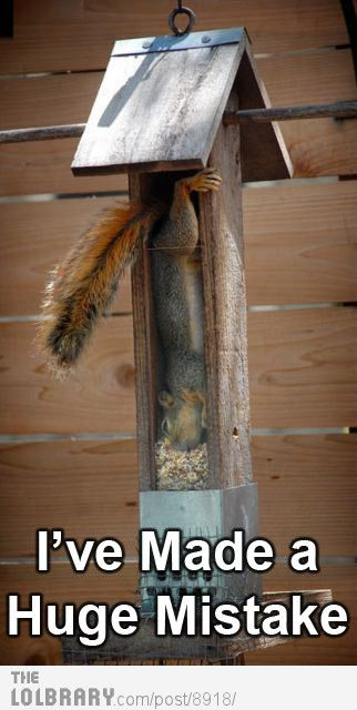 HAHAHAHA!: Funny Animals, Silly Squirrel, Bird Feeders, Funny Stuff, Squirrel Proof Bird Feeder