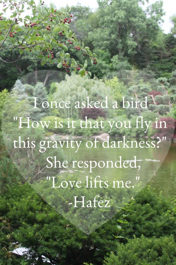 Hafez quote. I once asked a bird How is is that you fly in this gravity of darkness? She responded Love lifts me. #hafez #hellolovelystudio #encouragement #poetry #inspiringquote