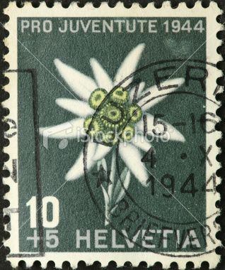 Vintage Swiss Edelweiss stamp.