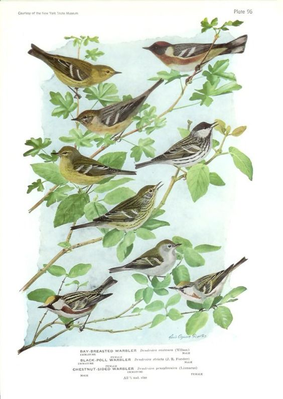 a charm of warblers