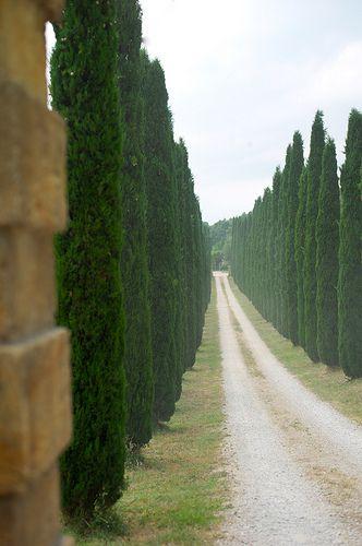 Tipo de árbol ciprestres italianos para el lugar donde está la ventana en la escalera: