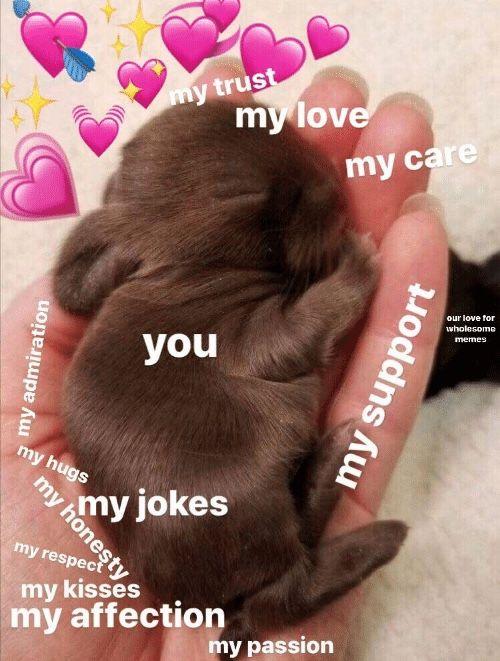 Pin By Yuliya Midori On Feels In 2021 Cute Love Memes Happy Memes Cute Memes