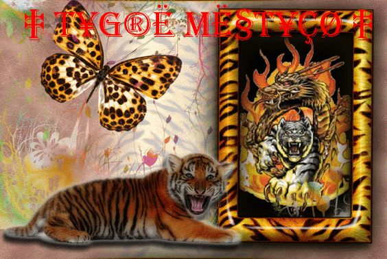 fotos grandes gifs tigres - Pesquisa Google