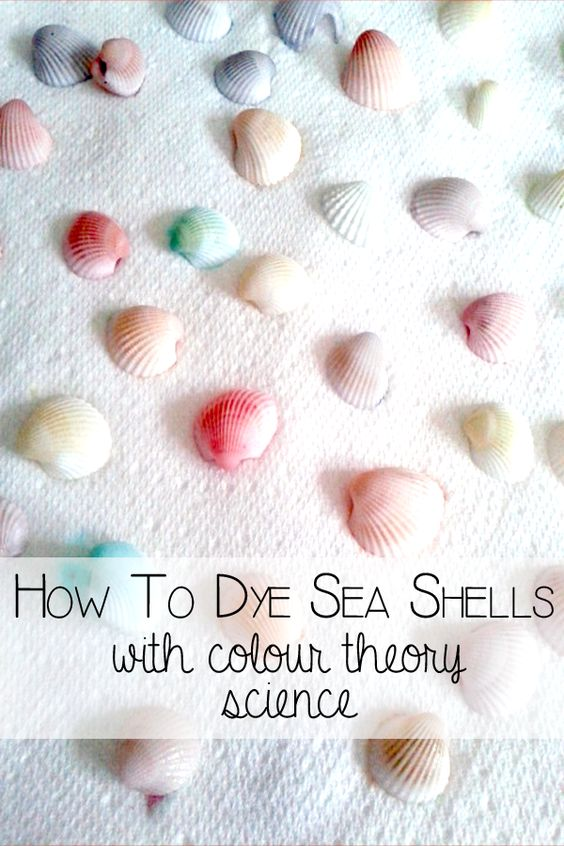 How to dye seashells and teach color theory at the same time.