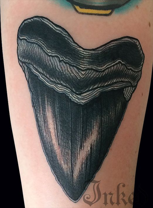 Shark Teeth Tattoo: Shark Tooth B&w
