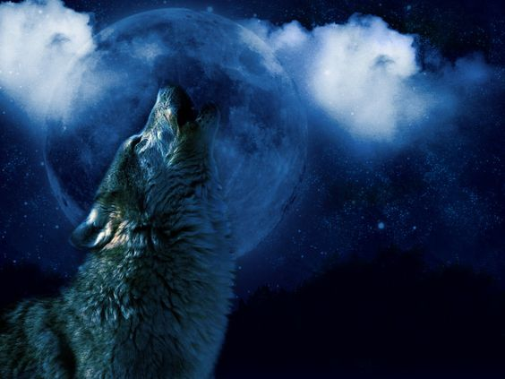 Wolf Howling at the Moon - Bing Images | wolf | Pinterest ...