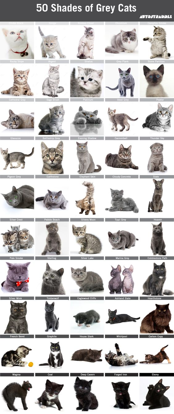 50-shades-grey-cats-autostraddle-4