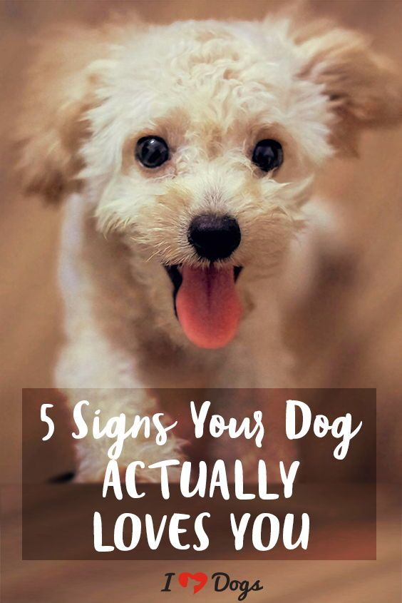 5 Signs That Your Dog Actually Loves You Positive Dog Training