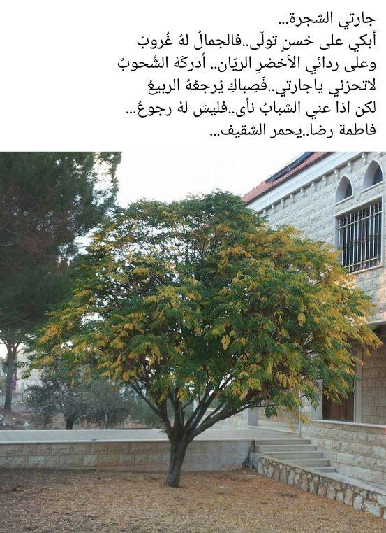 مدونة جبل عاملة جارتي الشجرة شعر فاطمة رضا In 2020 Plants Blog