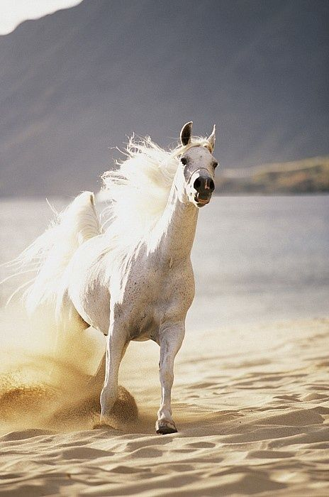 *Beautiful horse | Horses | Pinterest | Beautiful, White ...
