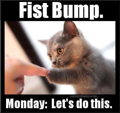 Monday Meme Cute Animals