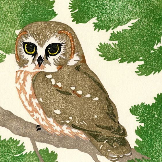 Northern Saw-whet Owl by sparrowpress on Etsy