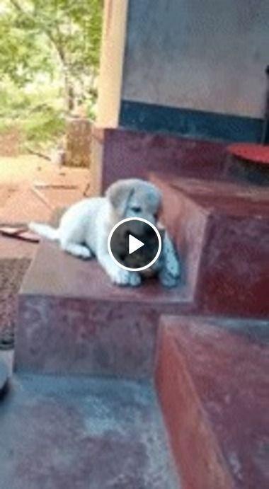 cachorro esta querendo ser amigo do gato….